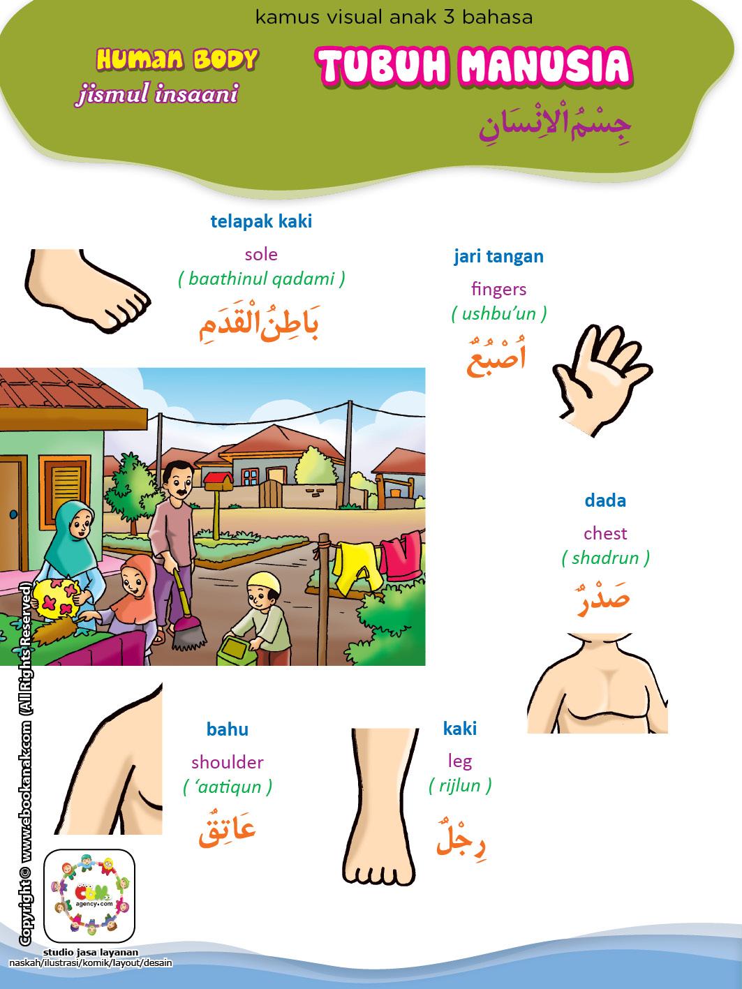 Kamus Visual 3 Bahasa 2