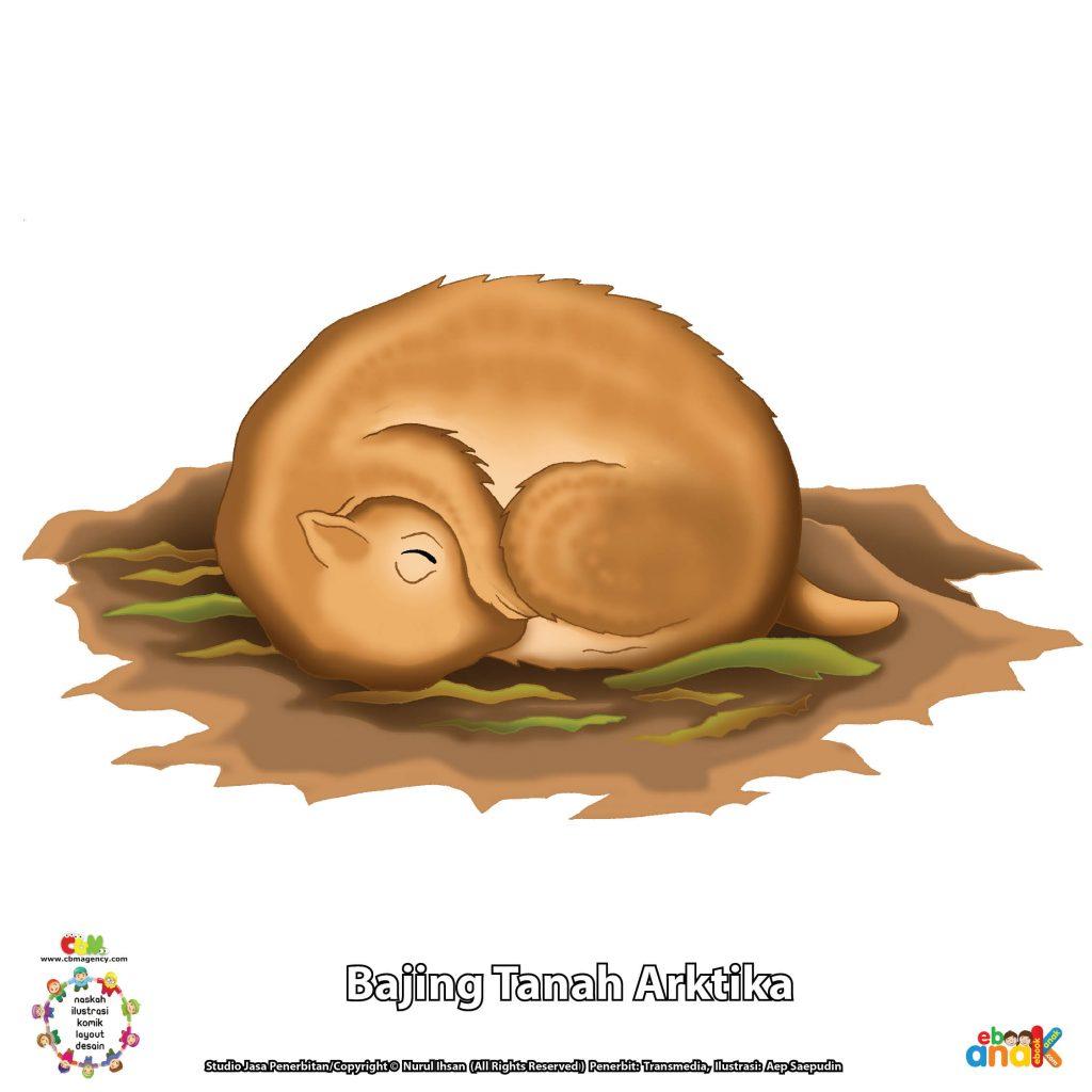 gambar bajing tanah arktika