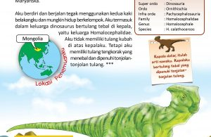 Dinosaurus Homalocephale berkepala datar.