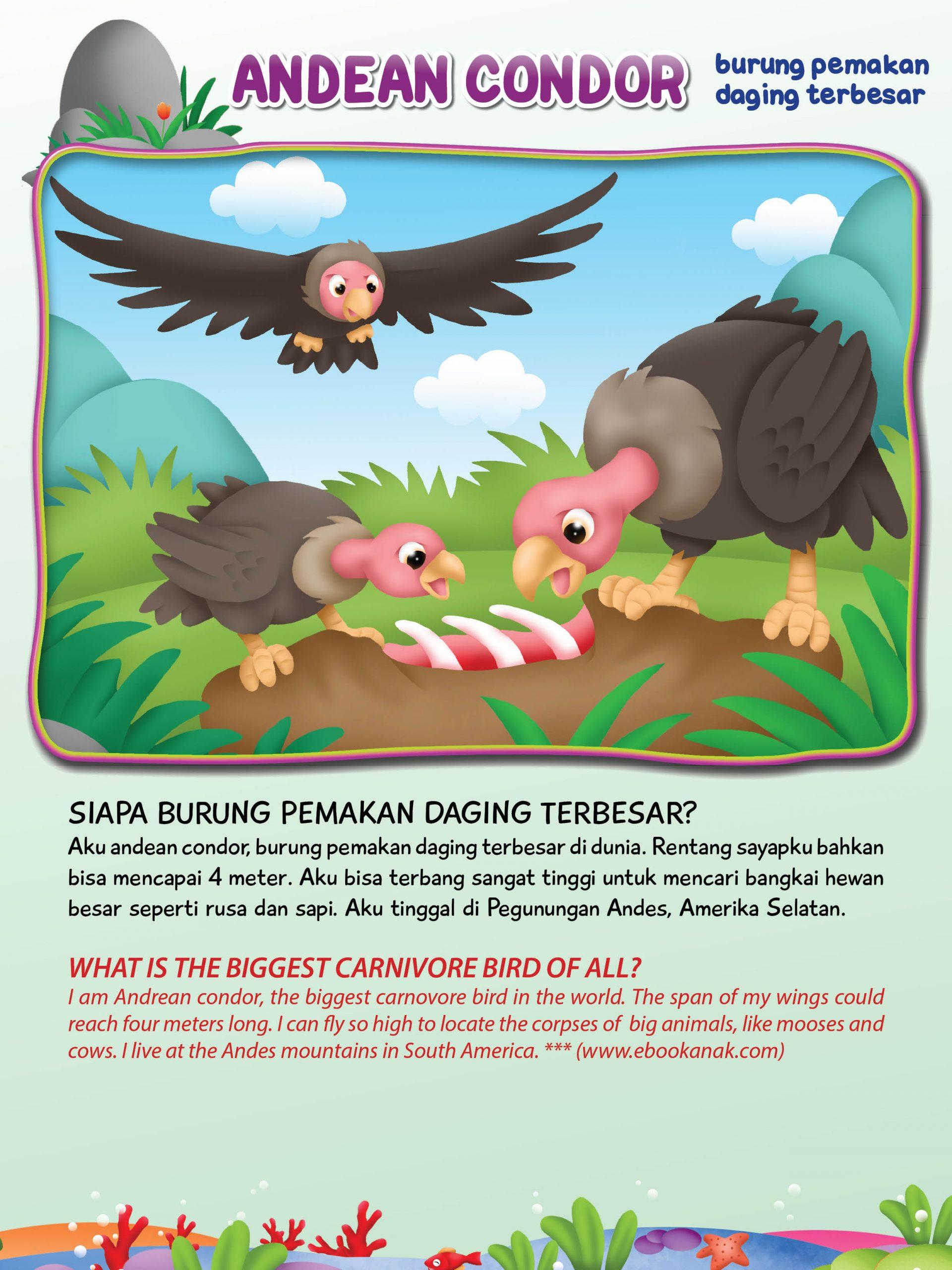 Rentang sayap burung andean condor bahkan bisa mencapai 4 meter.