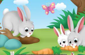 Jika ada bahaya, kelinci liar akan menghentak-hentakkan kaki belakangnya di atas tanah untuk memberitahu kawannya.