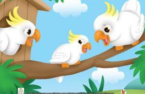 Burung kakaktua bisa memasukkan makanan ke mulutnya dengan cakar kakinya.