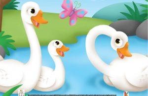 Ketika kecil, angsa seperti bebek, berleher pendek, dan berbulu abu-abu.