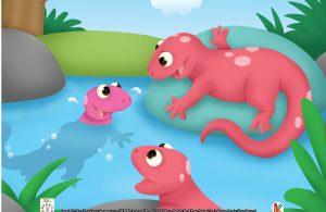 Salamander dikenal sebagai hewan pemalu karena ia lebih senang bersembunyi di tempat-tempat tersembunyi, seperti di bawah batang kayu.