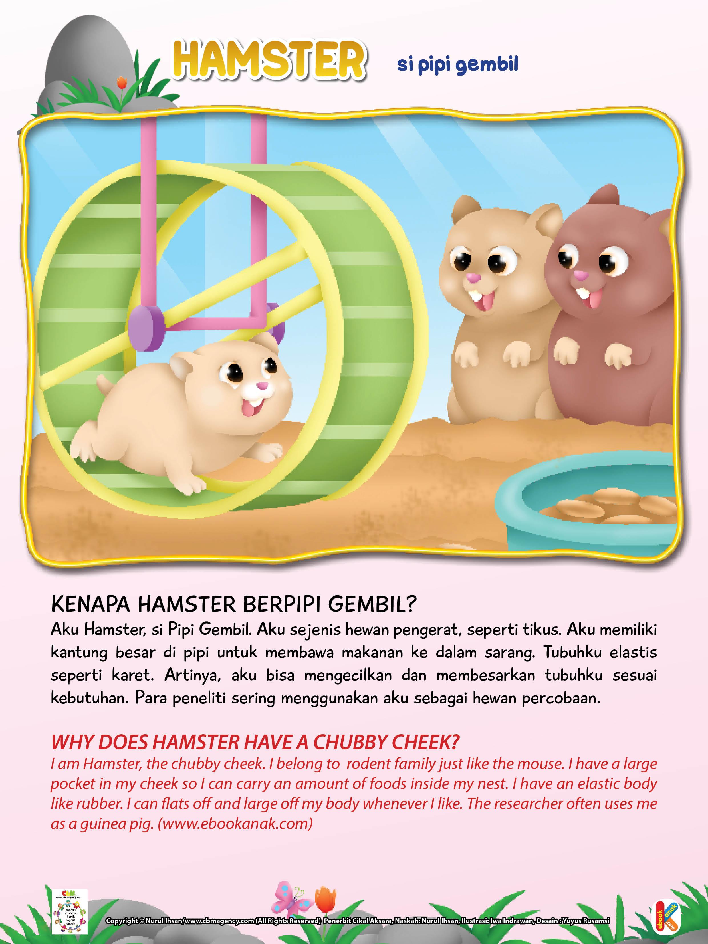 Hamster bisa mengecilkan dan membesarkan  tubuhnya sesuai kebutuhan.