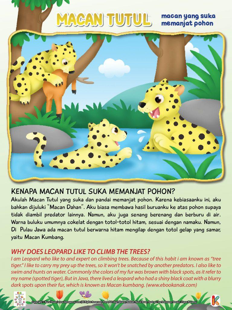"""Karena kebiasaan ini, macan tutul bahkan dijuluki """"Macan Dahan"""".  Macan tutul biasa membawa hasil buruannya ke atas pohon supaya tidak diambil predator lainnya."""