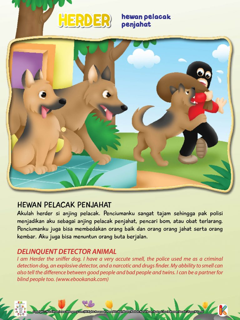 Penciuman anjing herder juga bisa membedakan orang baik dan  orang orang jahat serta orang kembar.