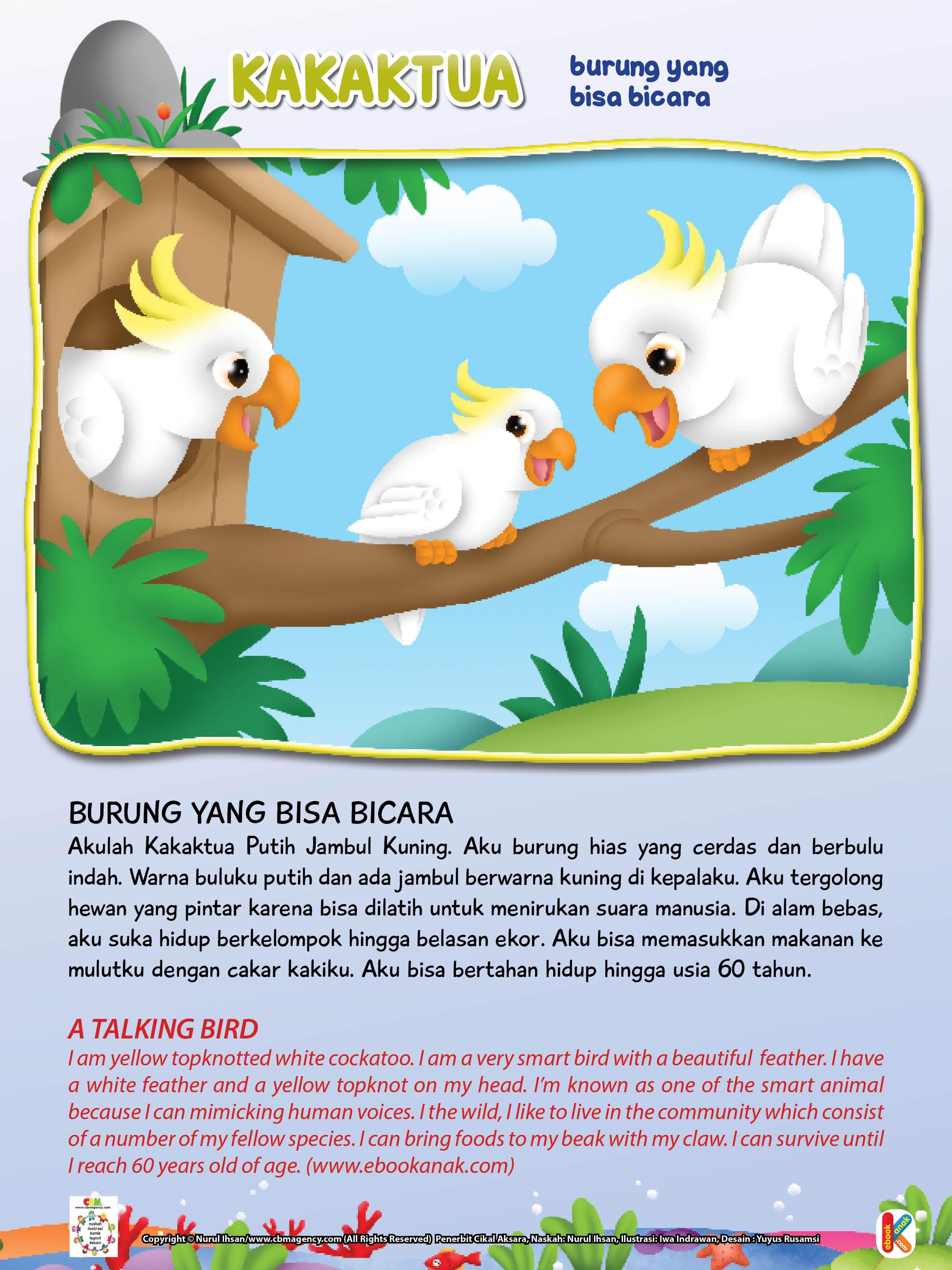 Di alam bebas, burung kakaktua suka hidup berkelompok hingga belasan ekor.