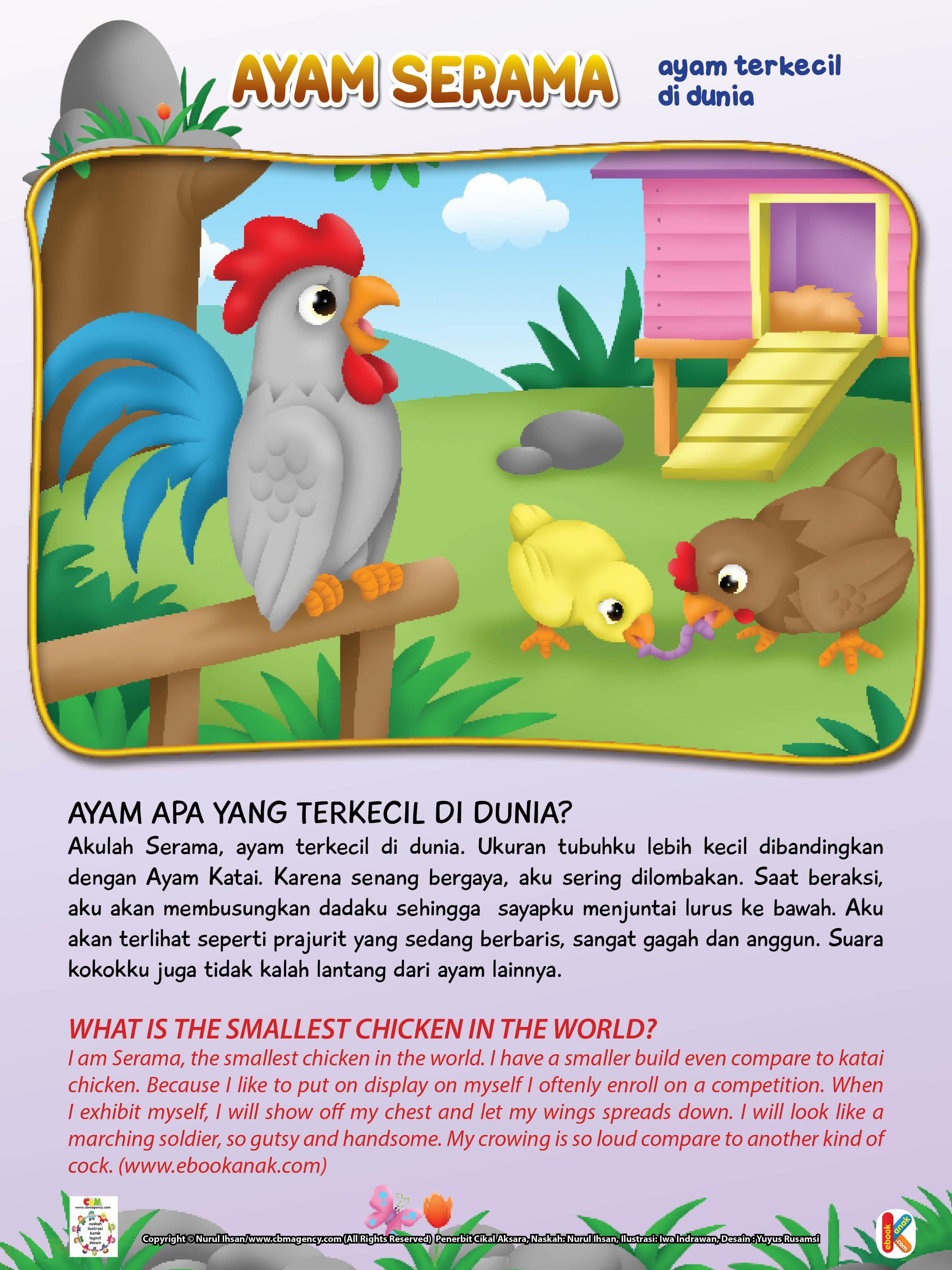 Karena senang bergaya, ayam serama sering dilombakan.