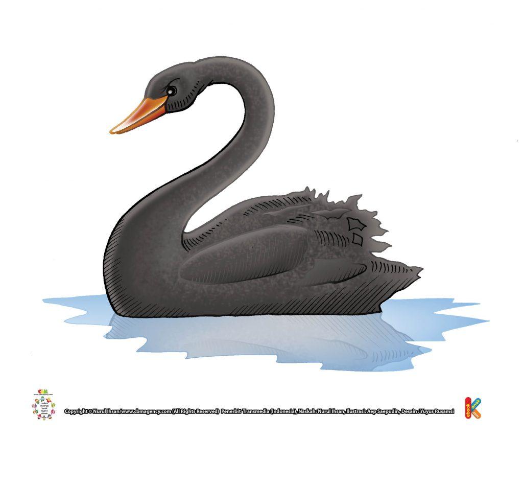 ilustrasi-angsa-hitam-australia