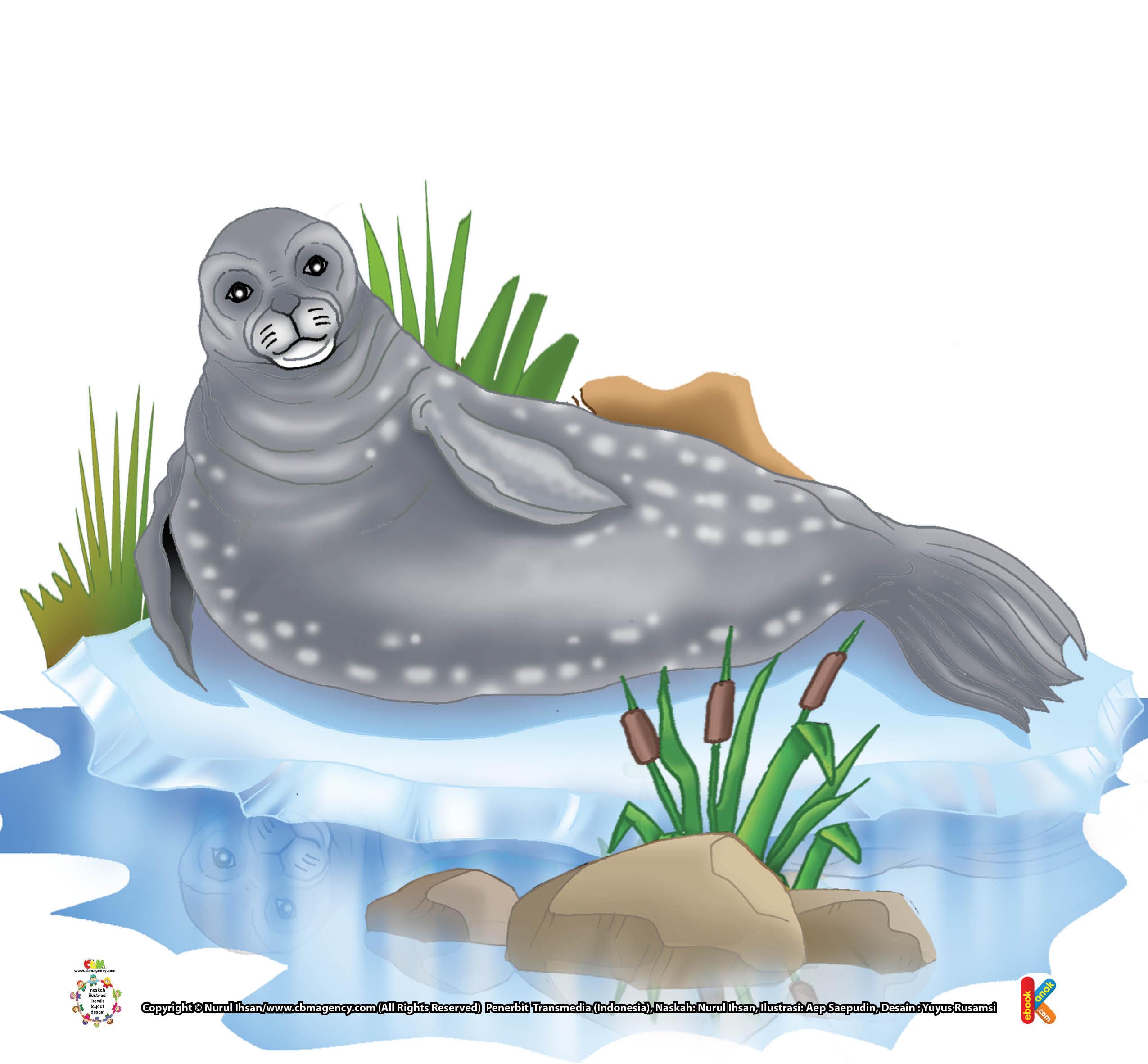 Panggilan Aneh Di Bawah Air Anjing Laut Weddel