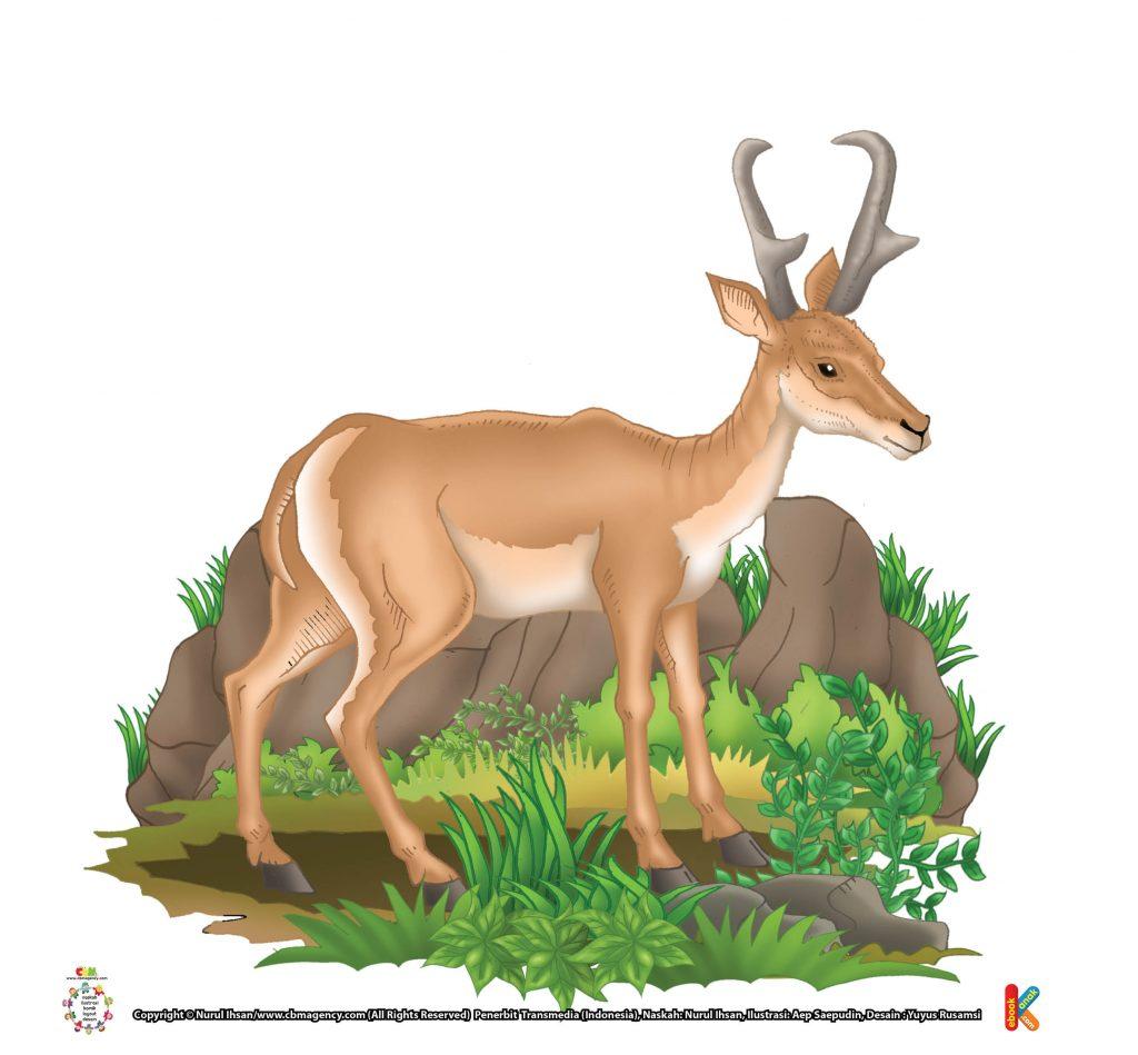 ilustrasi-antelop