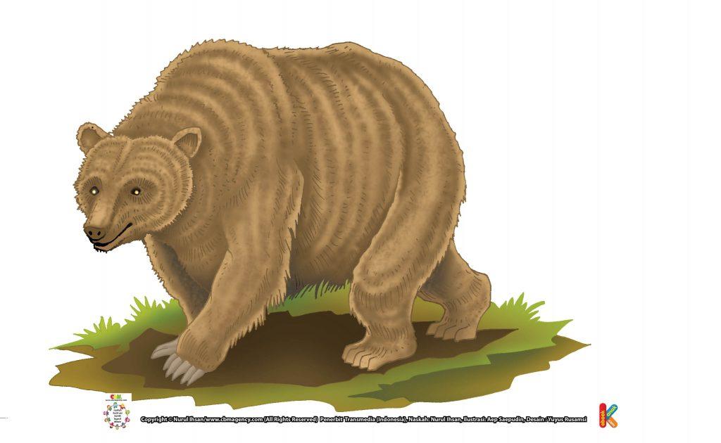 ilustrasi-beruang-grizzly