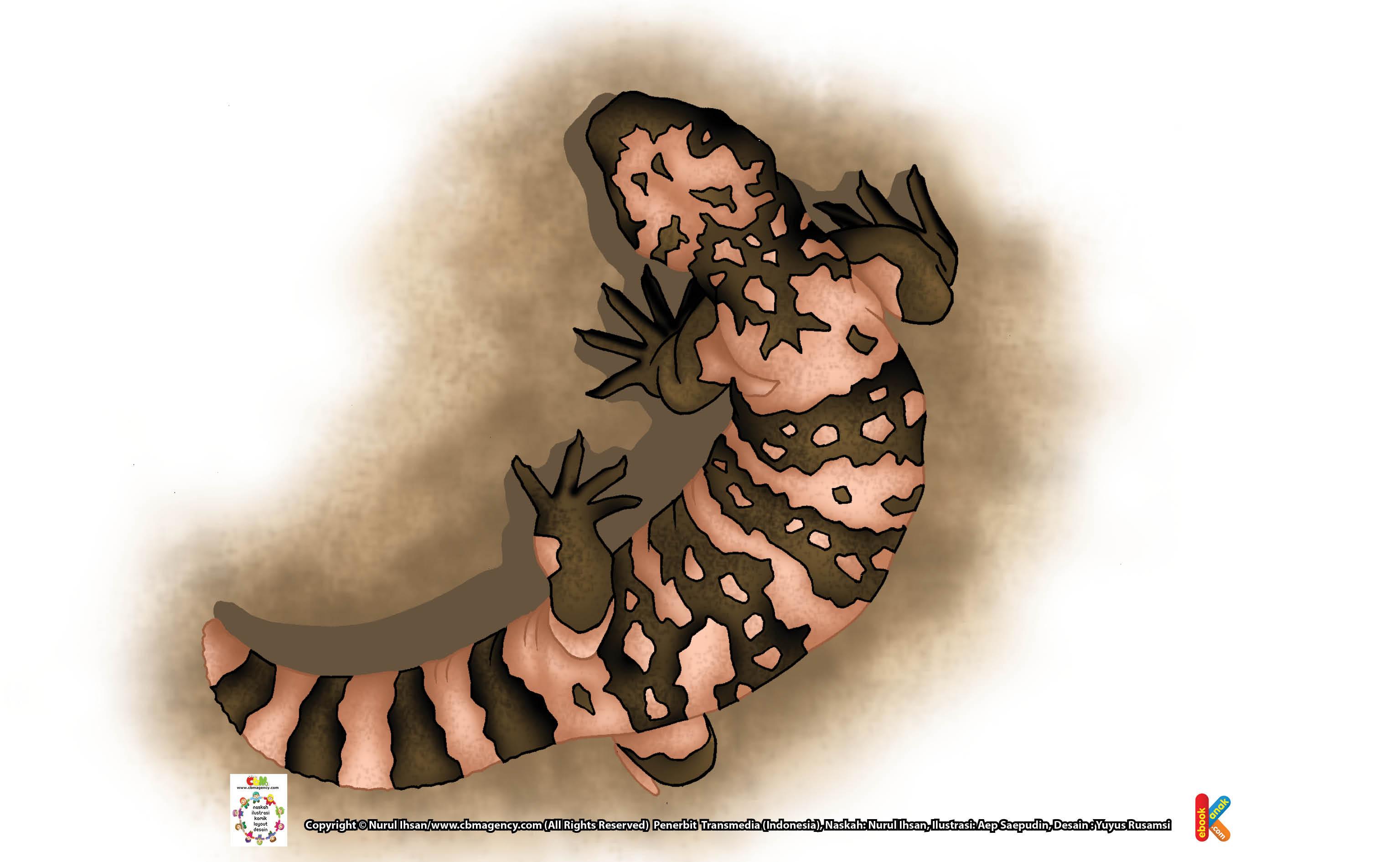kadal gila monster menyimpan lemak di tubuhnya, terutama pada bagian ekor.