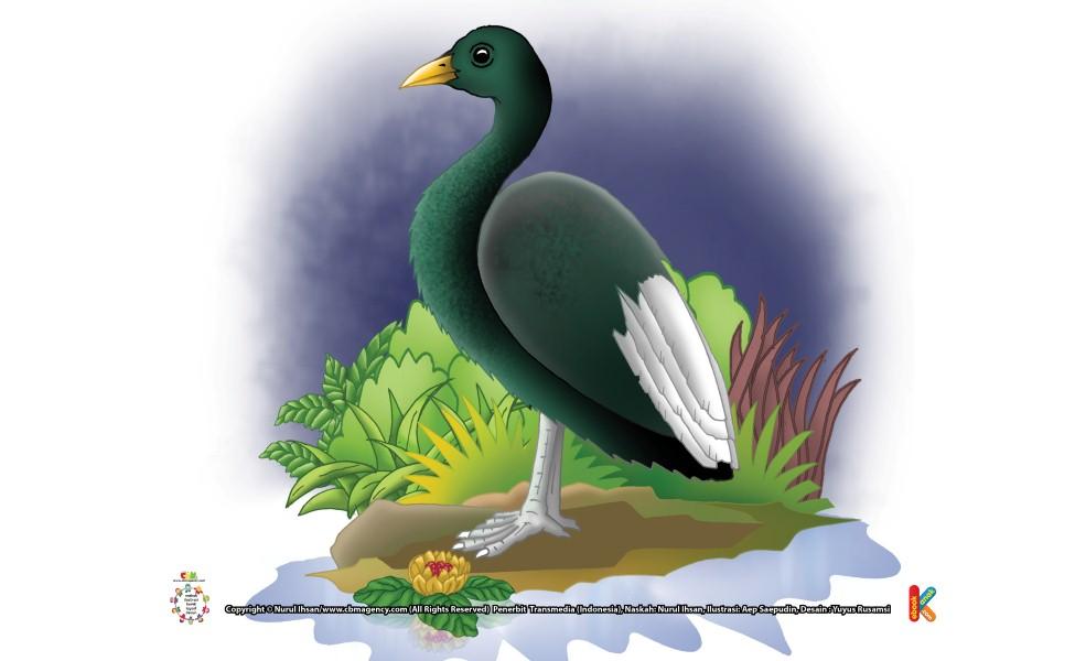 Burung Belibis Kutub Berubah Warna Tiga Kali
