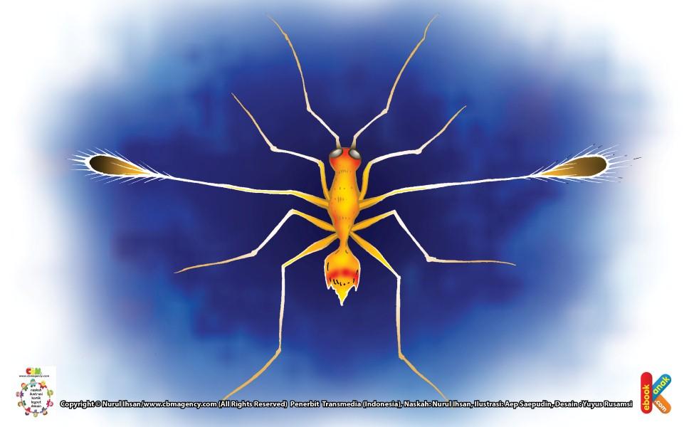 Lalat Peri Serangga Terkecil Dunia