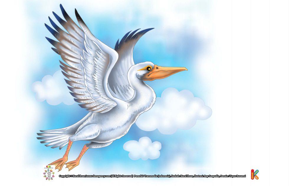 ilustrasi-pelikan-burung-berparuh-terbesar-di-dunia