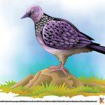 Tekukur Burung Tercepat Bertelur Ebook Anak
