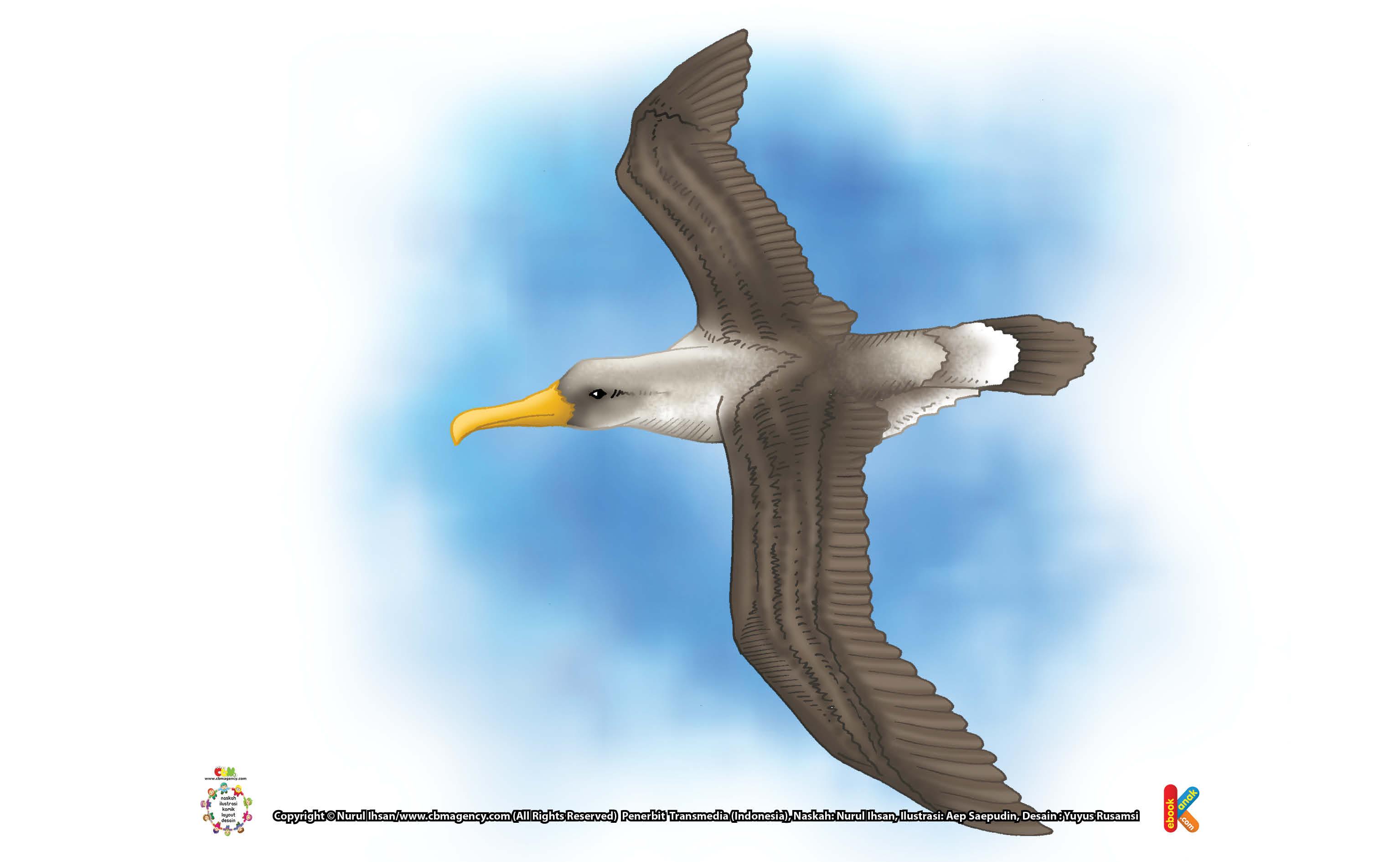 Albatros Bisa Terbang Sambil Tidur