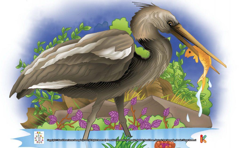 ilustrasi-burung-cangak