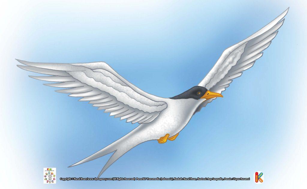 ilustrasi-burung-dara-laut-arktik