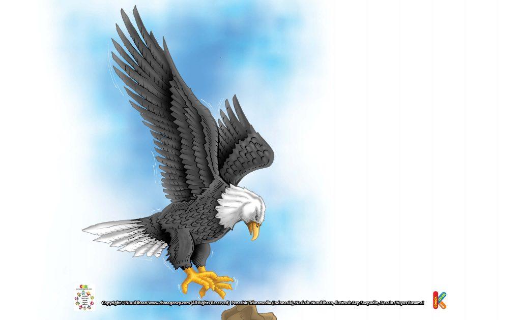 ilustrasi-burung-elang-kepala-putih