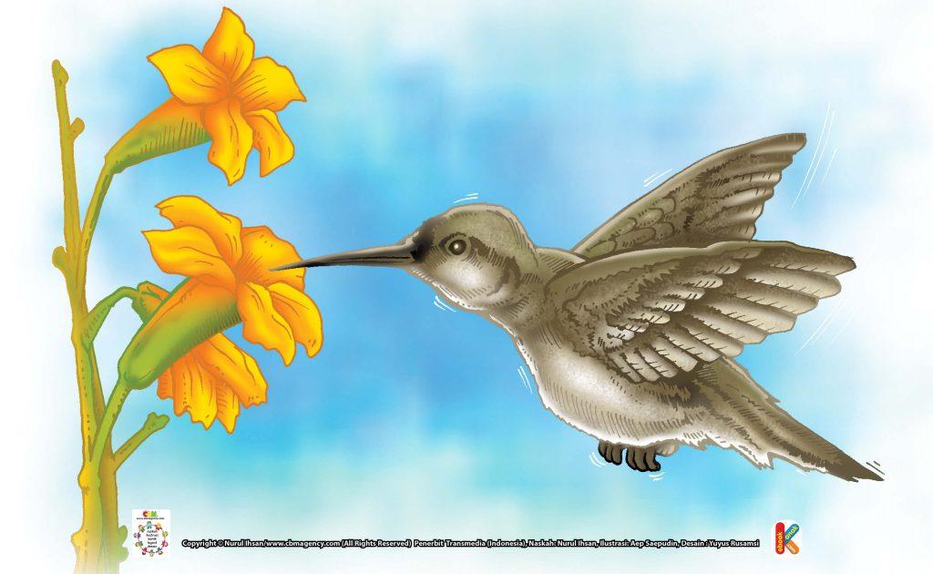 ilustrasi-burung-kolibri