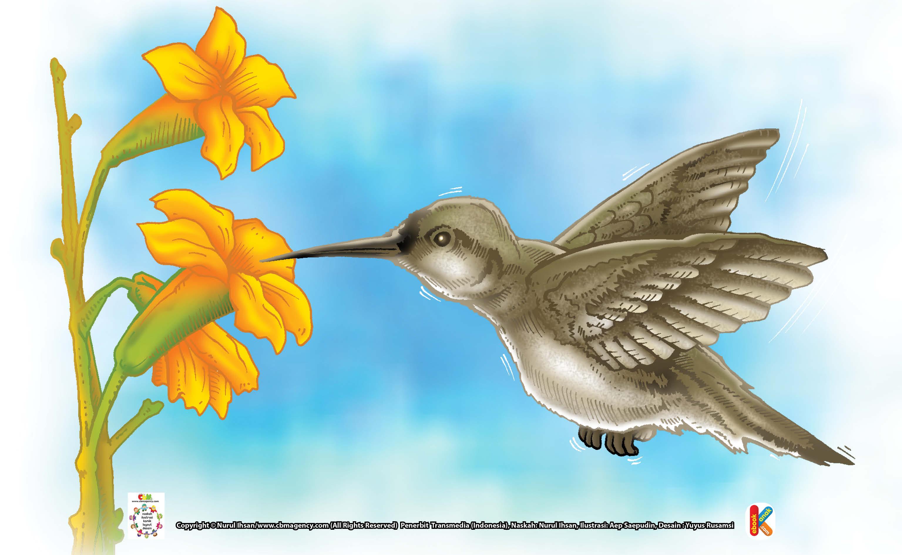 Download 99 Gambar Burung Ilustrasi Keren Gratis