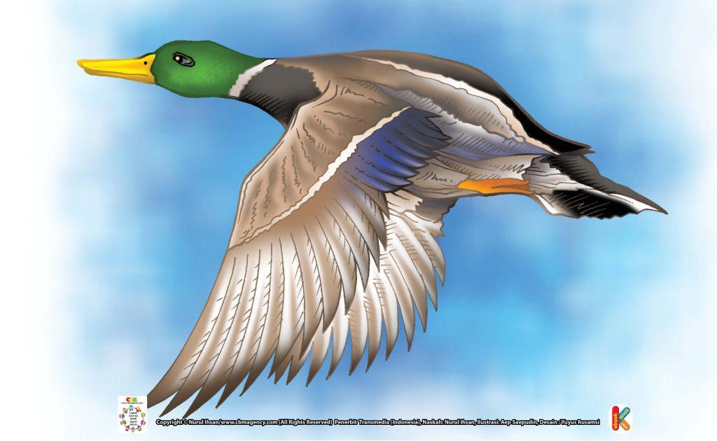 ilustrasi-burung-namaqua