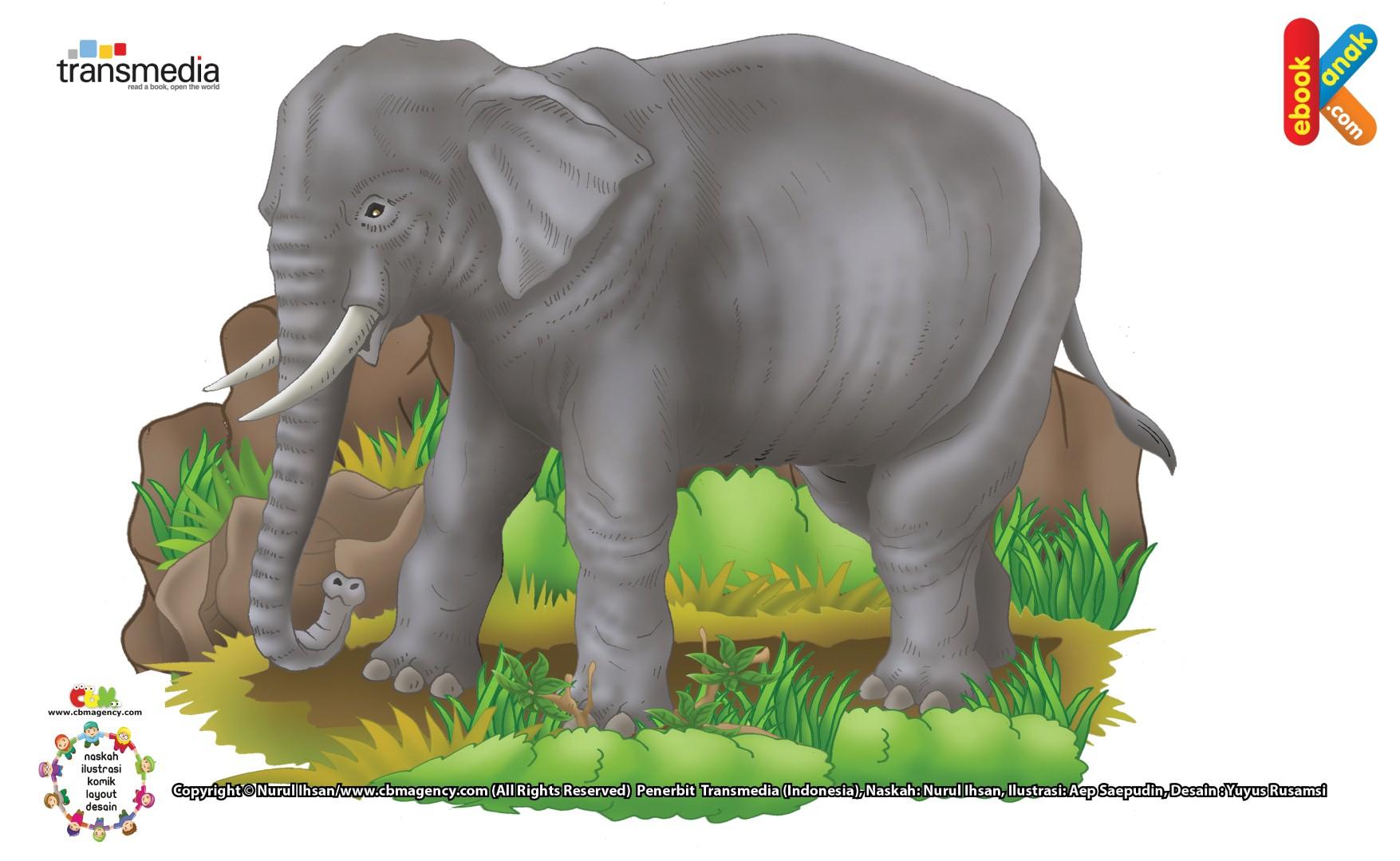 Gajah Tidur Sambil Berdiri