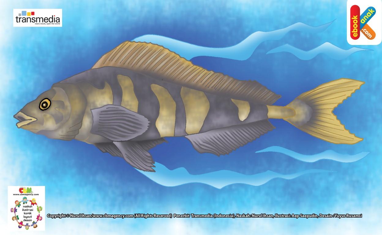 Ikan Makerel si Ikan Kalengan