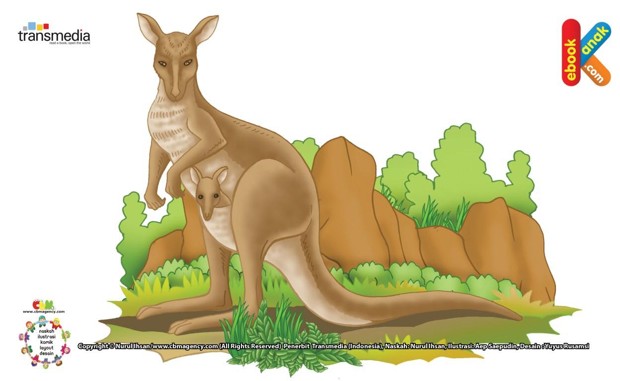 Kanguru Hewan Pelompat Terjauh di Dunia