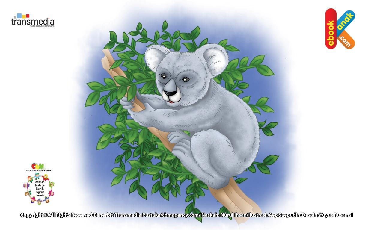Koala Hewan Yang Jarang Minum