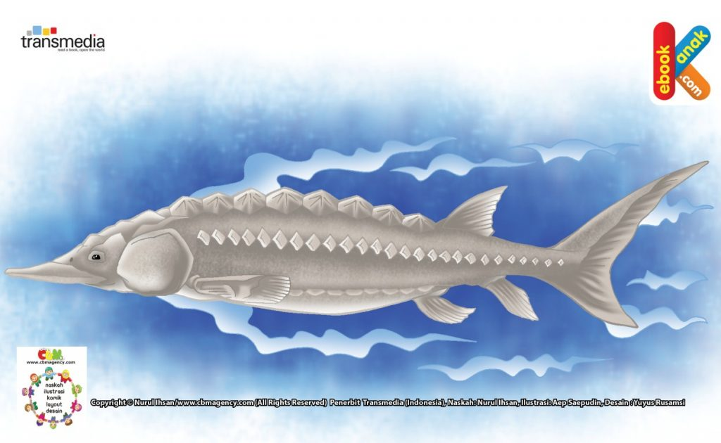ilustrasi-sturgeon-ikan-termahal-dan-usia-terpanjang