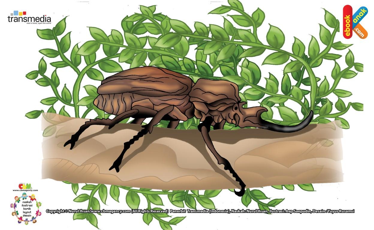 Kumbang Gajah Sangat Sayang pada Pasangannya