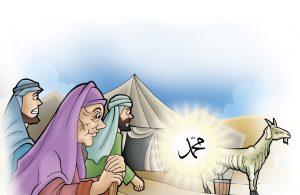 Mukjizat Rasul Domba Kurus Menghasilkan Susu