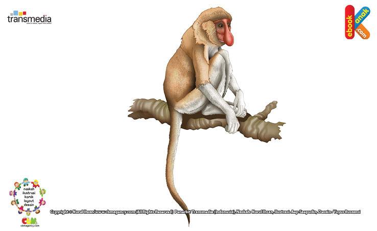 Namun hanya monyet bekantan jantan saja yang memiliki hidung sepanjang itu.