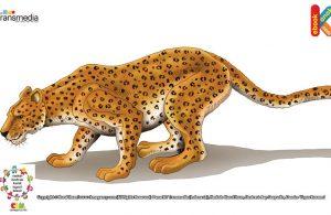 Macan tutul hewan penyendiri