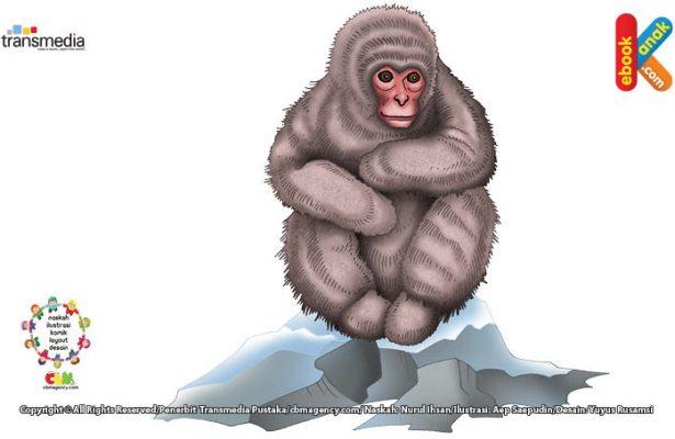 Monyet Jepang suka bermain bola-bola salju seperti manusia.