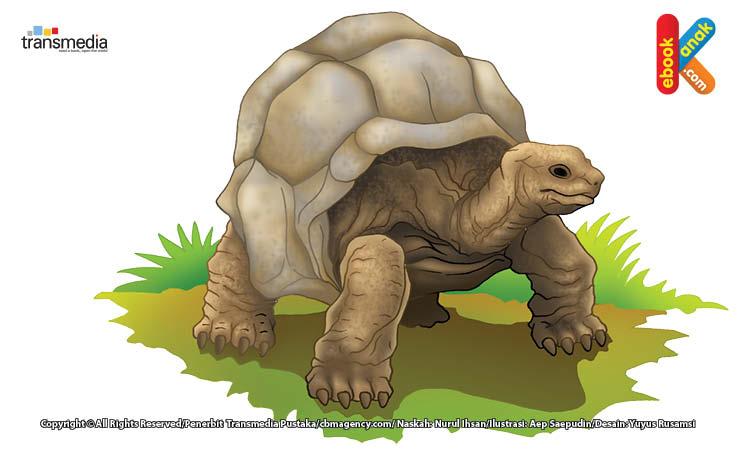 Kura-kura aldabra termasuk hewan yang jinak dan mudah didekati manusia.