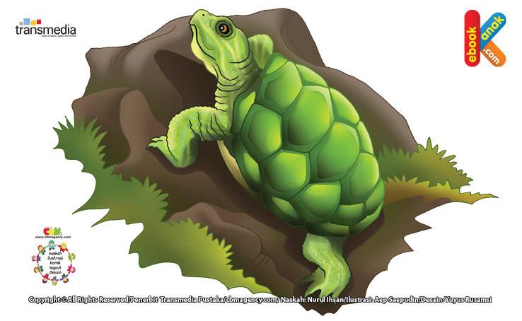 Kura-kura Brazil berasal dari Amerika Serikat Selatan.