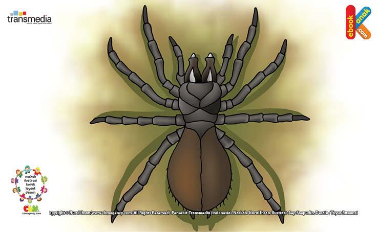 Laba-laba Tidak Bisa Melihat dan Mendengar