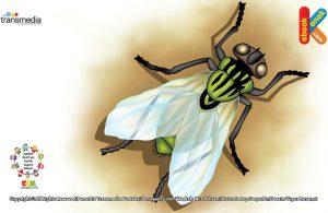 Lalat disebut serangga berumur terpendek di dunia karena hanya hidup beberapa jam saja.
