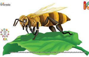 Lebah disebut serangga paling rajin di dunia, karena setiap hari seekor lebah pekerja harus pulang pergi 10 kali dan hinggap di 1.000 bunga sekali jalan.