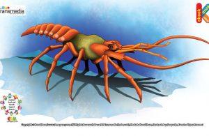 Jantung udang dan lobster ada di kepala.