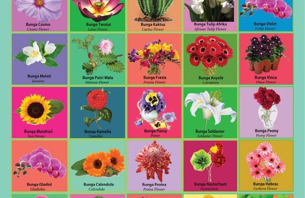 download gratis poster belajar mengenal jenis jenis bunga