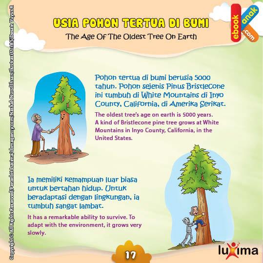 Pohon sejenis Pinus Bristlecone ini tumbuh di White Mountains di Inyo County California di Amerika Serikat