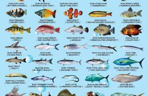 download gratis poster mengenal 50 ikan bilingual bahasa indonesia inggris