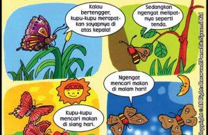 Apa Sih Perbedaan Kupu-Kupu dan Ngengat?