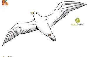 Albatros Burung Bersayap Terpanjang